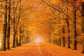 اجمل صور عن فصل الخريف