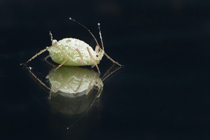 How To Treat Head Lice And Nits?