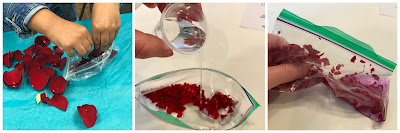 Extracting anthocyanins from flower petals