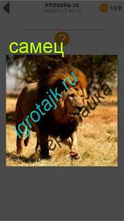 лев самец в гордом одиночестве ответ на 26 уровень 400 плюс слов 2
