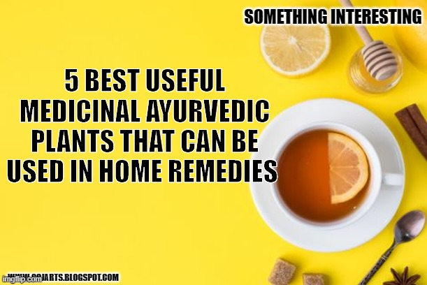 5 best useful medicinal ayurvedic plants that can be used in home remedies