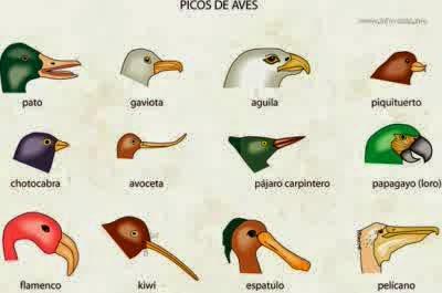 Bentuk paruh burung sesuai dengan makanannya