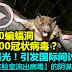 湖北10蝙蝠洞发现300冠状病毒?影片曝光!引发国际间讨论,出现「实验室流出病毒」的阴谋论