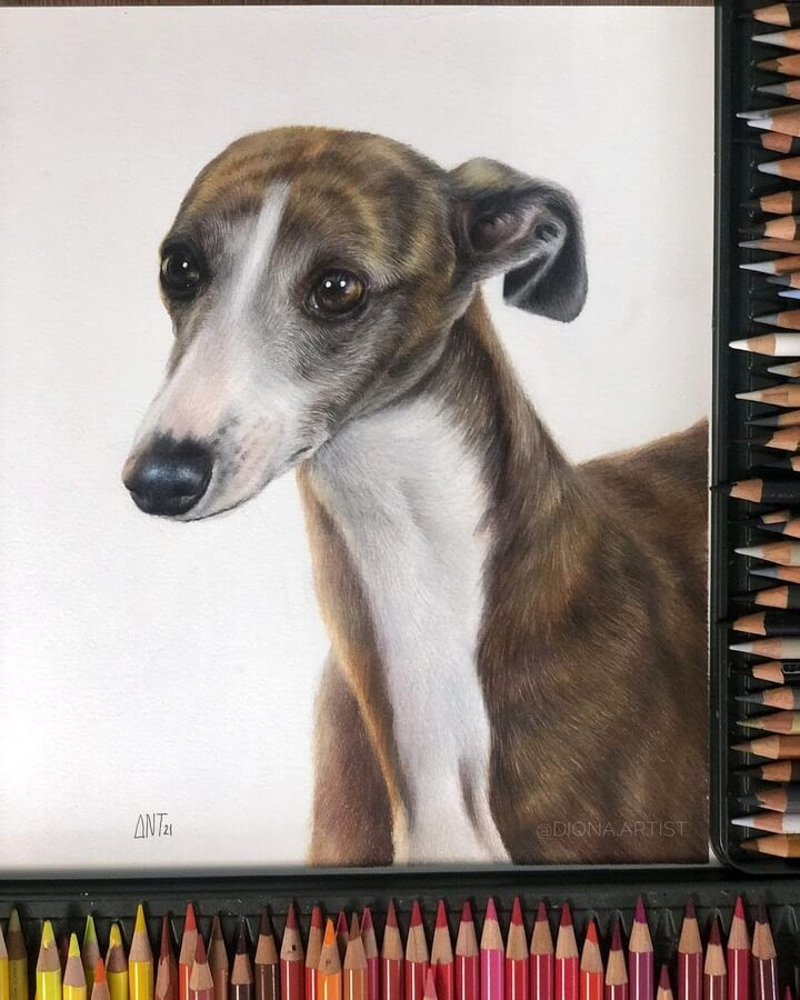 02-Whippet-Diona-Ant-www-designstack-co