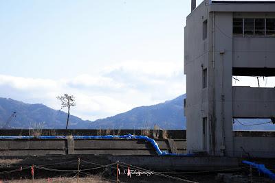 3.11 東日本大震災 復興支援 東北 奇跡の一本杉
