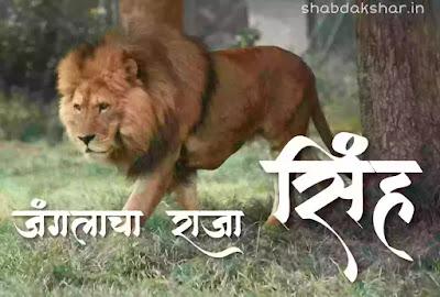 जंगलाचा राजा सिंह मराठी निबंध