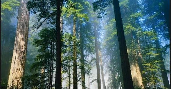 Sumber daya alam dan perekonomian Masyarakat - Materi ...