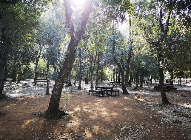 Bosco delle Pianelle in Puglia con tavoli attrezzati