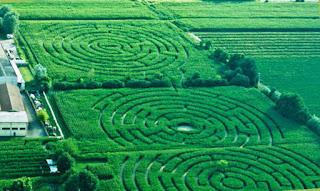 Labirinto Alfosine