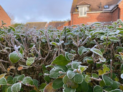 Frost on a hedge