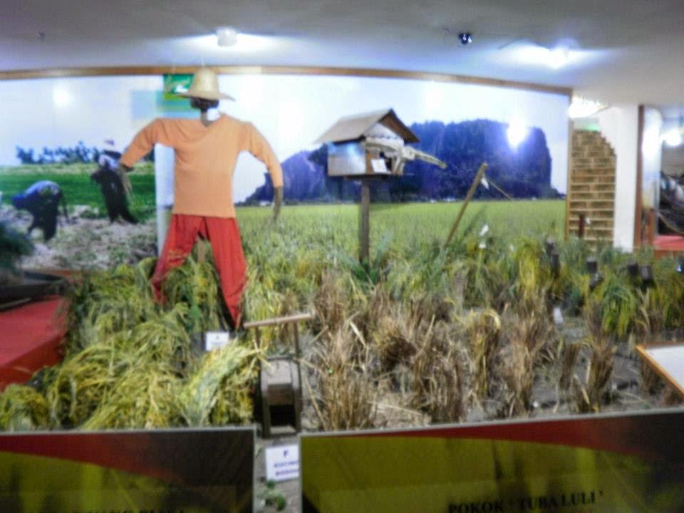 rice museum, muzium padi alor setar kedah, gurung keriang, rice products, rice exhibition, how to cultivate rice, tourism, travel, malaysia, travel alor, setar