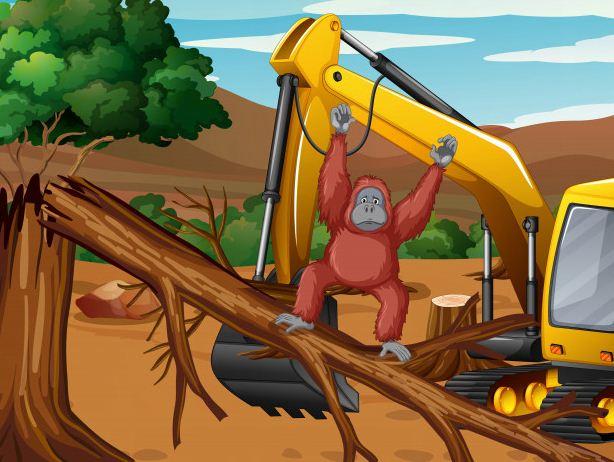 5 Penyebab Deforestasi Hutan Dan Solusinya