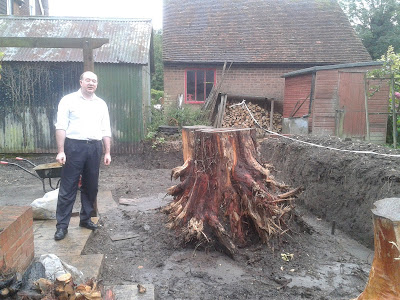 Leylandii tree stumps felling