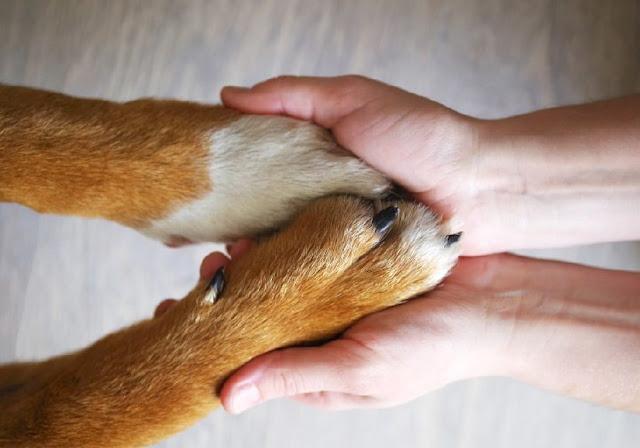 Artrosi nel cane è una patologia che può colpire tutte le razze