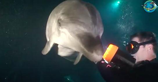 Συγκινητικό Βίντεο: Χτυπημένο Δελφίνι Πλησιάζει Δύτη Για Να Το Βοηθήσει