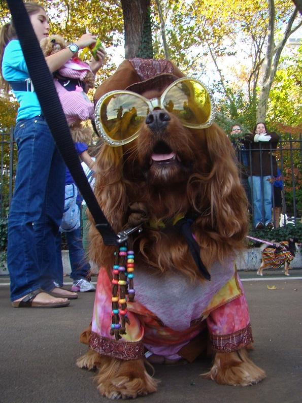 Halloween dog NYC