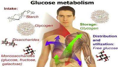 Metabolisme Karbohidrat, Lemak dan Protein