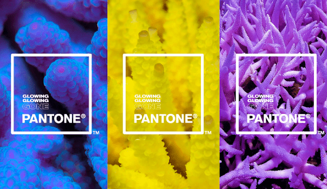 glowing-Pantone-Adobe-paleta-colores-inspirada-corales