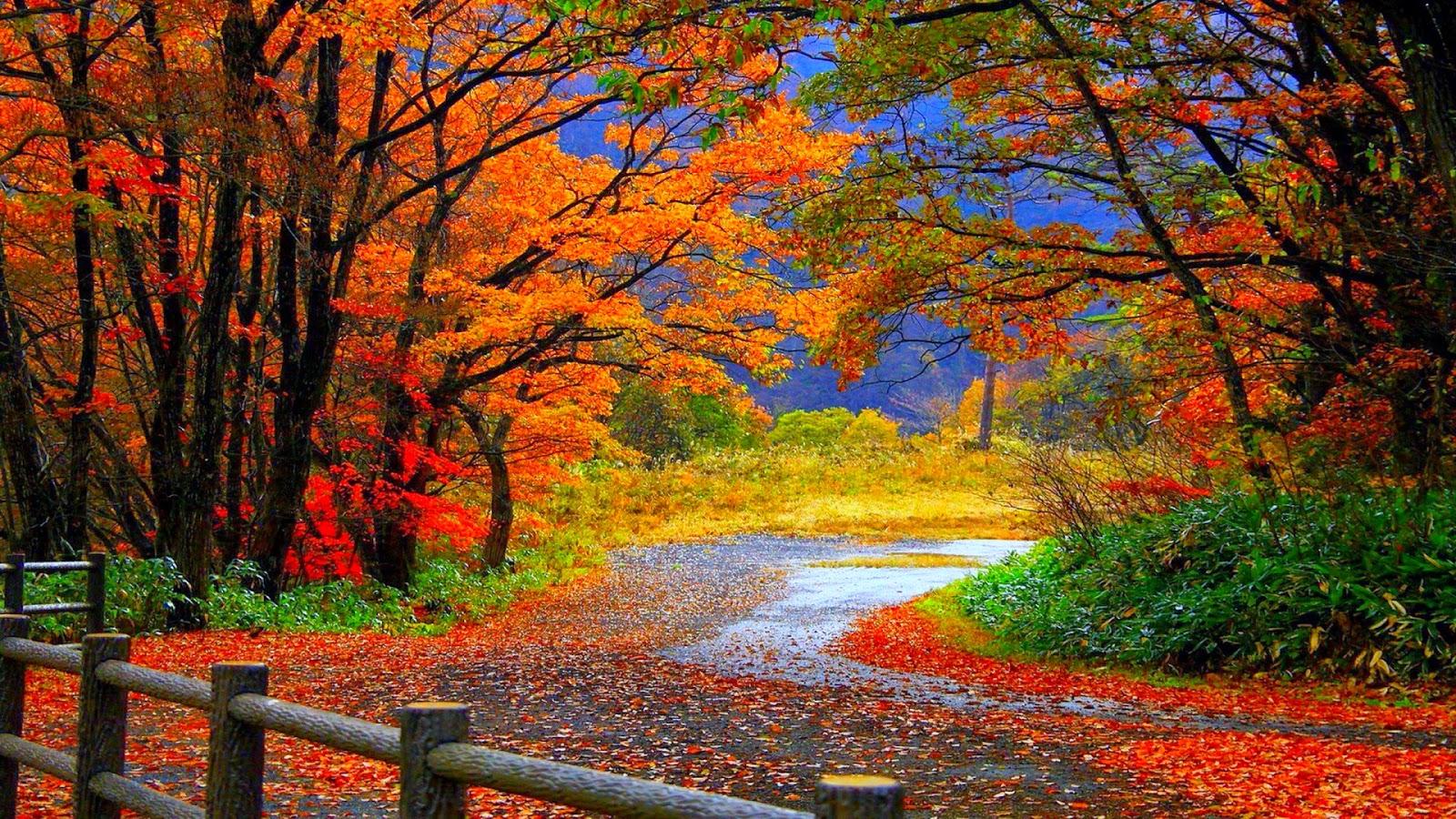 خلفيات طبيعية لفصل الخريف
