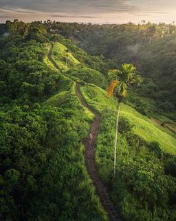 Destinasi Campuhan Ridge Walk Bali
