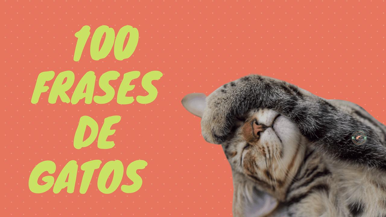 100 frases de gatos
