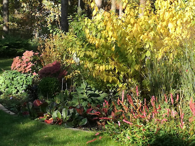 kolory jesieni, migdałek jesienią