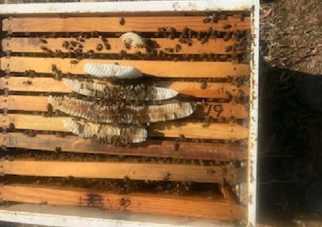 Έχτισαν κηρήθρες γεμάτες μέλι πάνω από τα πλαίσια... Θα ήθελα την χρήσιμη άποψή σας!