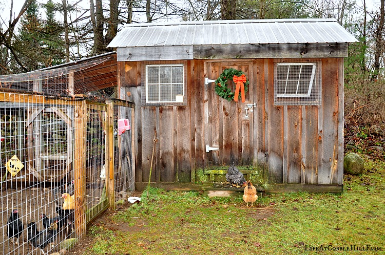 how to build poultry shed
