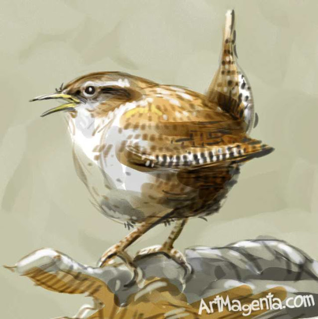 Winter Wren sketch painting. Bird art drawing by illustrator Artmagenta.a
