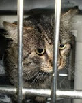 12/26/11 Time Up for Tabby Cats and Orange Cat at Kill Shelter Licking County OH Transports to ILL