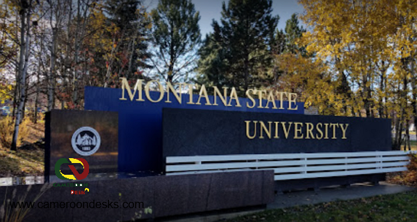 Montana State University Presidential Scholarships 2021/2022 for International Undergraduate Students – USA