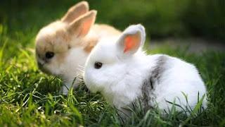 gambar anak kelinci imut