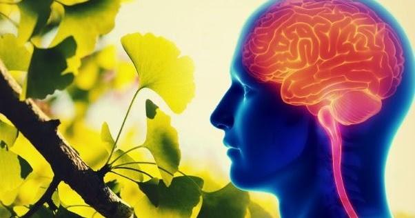 Una pianta cinese miracolosa può curare l'Alzheimer. E la scienza lo conferma