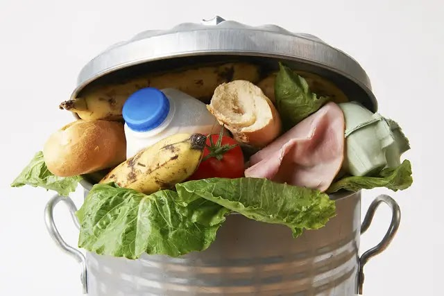 How to get rid of food waste properly can be profitable for you