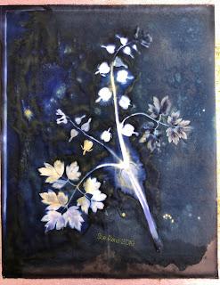Wet cyanotype_Sue Reno_Image 586