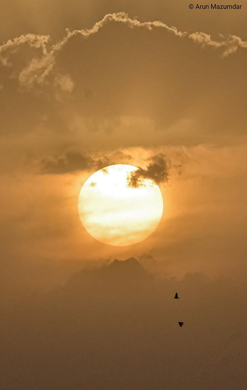 """Bird or Birds"" - Photography Contest Entry by Arun Mazumdar"