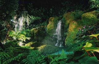 Rainforest - Photo by Mandy Choi on Unsplash