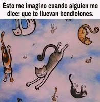 bendiciones gatos humor