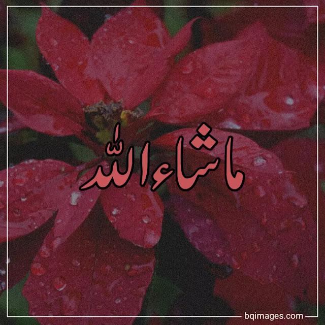 masha allah logo images