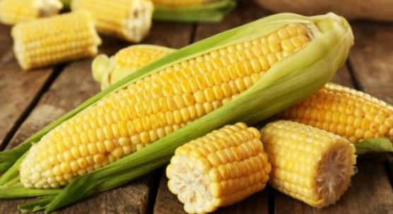 نرشدك يا فلاح .. زراعة الذرة الرومية