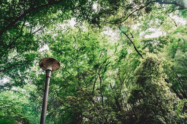 緑,インスタ映え,自然,大自然