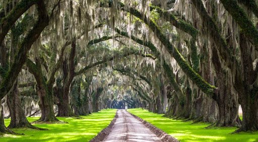 Tourist Attractions in South Carolina