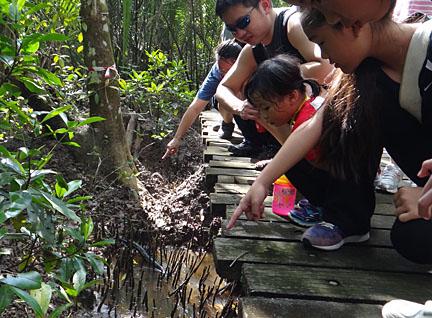 wild shores of singapore: First Naked walk at Chek Jawa