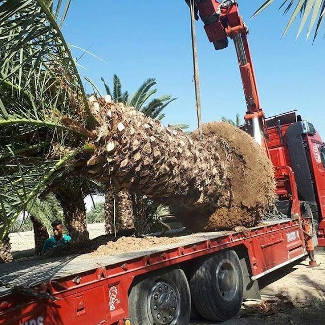 شركة زراعة الحدائق بالدمام والمنطقة الشرقية