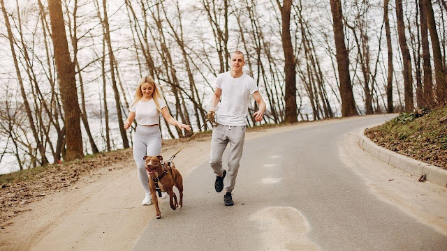 Keeping your Pitbull on Leash