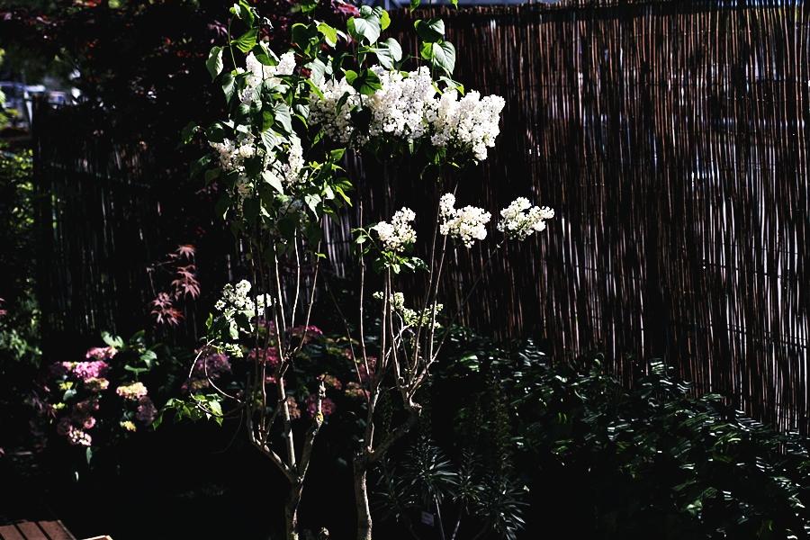 blumen garten berlin haus wohung eigentum pflanzenfreude