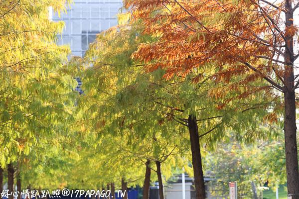 《台中.南屯》台中文心森林公園、圓滿戶外劇場-全台最大的戶外表演環型劇場