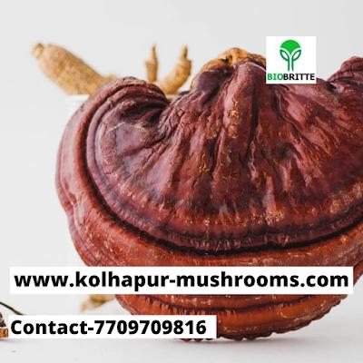 Reishi Mushroom Supplier