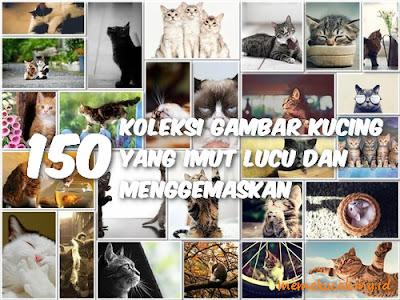 150 Koleksi Gambar Kucing Yang Imut