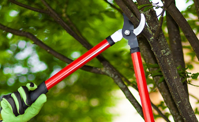 Tree-Pruning-Epping-and-Ryde